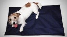 dispositivos magnéticos para perros