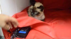 gatos usan magnetoterapia