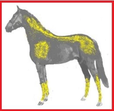 como funciona la magnetoterapia en caballos