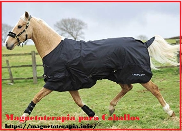 magnetoterapia para caballos